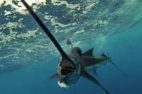 Mega Bite Fishing Dominica
