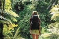 Milford Track Guided Day Walk from Te Anau