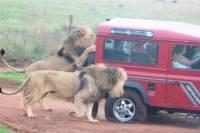 Mini Safari Tour from Durban