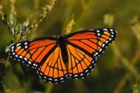 Monarch Butterfly Tour In Valle de Bravo from Mexico City