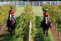 Mornington Peninsula Horseback Winery Day Trip from Melbourne