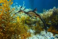 Mornington Peninsula Small-Group Seadragon Snorkel Tour