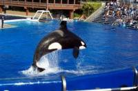 Multi-Day Trip from Anaheim to San Diego and Admission to SeaWorld