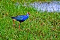 Muthurajawela Wetland Day Tour