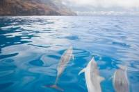 Napali and Ni'ihau 'The Forbidden Island' Kauai Snorkel Cruise