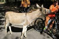 Nevis Island Discovery Bike Tour