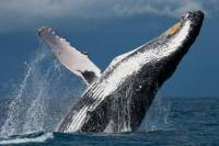 New Hampshire Whale Watch