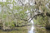 New Orleans Swamp Tour Boat Adventure