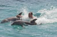 Ocho Rios Combo Tour: Dolphin Cove and Negril Sunset Cruise