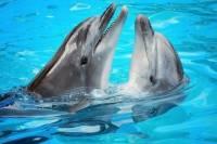 Ocho Rios Dolphin Encounter Program