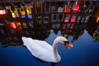 Offbeat Amsterdam Red Light District Nighttime Walking Tour with a Local Guide