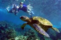 Oluwalu Honu Nui Kayak Snorkel