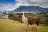 Otavalo Day Trip from Quito: Craft Market, Peguche Waterfall and Parque Condor