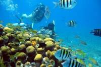 PADI Discover Scuba Diving Course in Cozumel