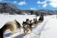 Pagosa Springs Dogsled Adventure