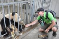 Panda Rescue Center Volunteer for a Day