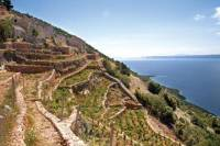 Peljesac Vineyards and Oyster Farms Private Tour from Dubrovnik