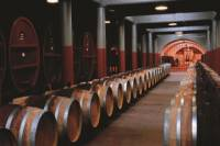 Penfolds Magill Estate Tour and Wine Tasting