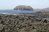 Phillip Island Nature Park and Wildlife Seals Cruise