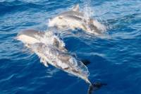Port Stephens Day Tour From Sydney Including 4WD, Sandboarding and Dolphin Watching