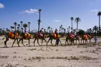Private 1-Hour Camel Ride in the Palm Grove of Marrakech