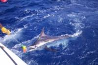 Private Big Game Fishing Excursion in St Lucia