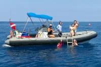 Private Charter: Kealakekua Bay Snorkel and Wild Dolphin Swim