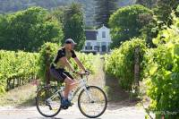 Private Cycling Tour of Constantia Winelands