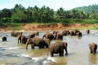 Private Day Tour: Pinnawala Elephant Orphanage from Colombo
