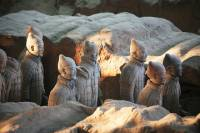 Private Day Tour: Xi'an Terracotta Warriors and City Wall
