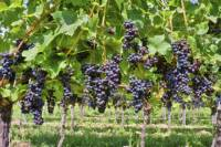 Private Irpinia Wine Tour from Naples with Sommelier