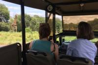 Private Morning Safari in Kruger Park from Hazyview