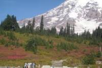Private Mount Rainier Tour from Seattle