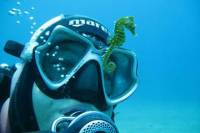 Private Scuba Diving from Split