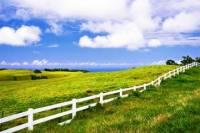 Private Tour: Big Island Organic Farms & Merriman