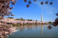 Private Tour: Customizable Tour Of Washington DC By SUV