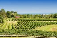 Private Tour: Niagara Falls Wineries