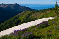 Private Tour: Olympic National Park Day Trip from Seattle