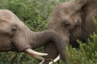 Private Tour: Pilanesberg National Park from Johannesburg