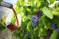 Private Tour: Ston and Peljesac Peninsula Day Trip with Wine Tasting