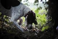 Private Tour: Truffle-Hunting Experience from Sorrento with Lunch