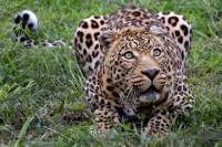 Private Tour: Wild Life Safari from Cape Town