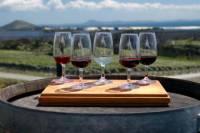 Private Tour: Wine Tasting in Bologna
