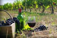 Private Wine Tour to Kakheti from Tbilisi