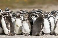 Puerto Madryn Shore Excursion: Private Day Trip to Punta Tombo Penguin Colony
