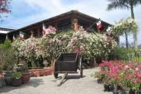 Puerto Vallarta Botanical Gardens and Lunch on Playa Las Gemelas