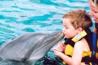 Punta Cana Dolphin Encounter