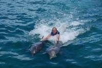 Punta Cana Dolphin Swim Adventure with Upgrade to Royal Dolphin Swim