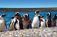 Punta Tombo Penguin Colony and Union Beach from Puerto Madryn