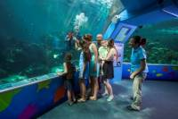 Reef HQ Great Barrier Reef Aquarium General Entry Ticket